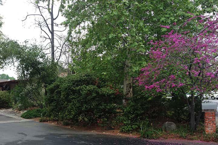 Garden 24 in Woodland Hills
